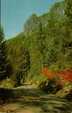 76 Union Oil Company Gasoline McKenzie Pass OR Scenes of West Postcard B42