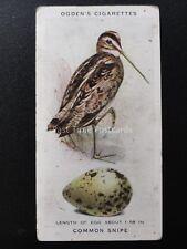 No.36 COMMON SNIPE  - British Birds & Their Eggs by Ogdens Ltd 1939