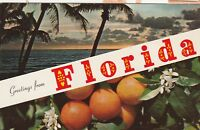 """*Florida Postcard-""""Greetings From..."""" -/Palm Trees-Oranges/"""