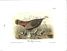 Wild Turkey (Female & Young) Vintage Bird Print by John James Audubon