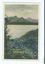 Hand Coloured/ Painted Real Photographic (rp) Collectable Postcards