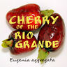 ~Cherry of the Rio Grande~ Eugenia aggregata FRUIT TREE Potd Small Plant Starter
