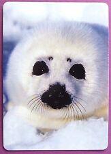 SWAP CARD. SEAL PUP. APPEALING WHITE FUR HARP / SADDLEBACK SEAL. WIDE.  MINT.