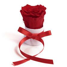 💐 Infinity Rose kleine Rosenbox in Weiß mit Rose konserviert haltbar 3 Jahre
