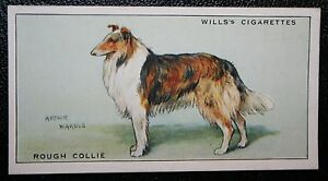 Rough Collie Dog     Vintage Coloured Card # VGC
