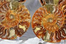 "1063 Cut Split PAIR Ammonite 190mm Deep Crystal Cavity 110myo FOSSIL XXLRG 7.5"""