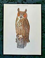 Antique 1915 Louis Agassiz Fuertes Print Plate# 57 Great Horned Owl