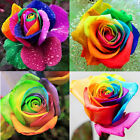 200pcs Colorful Flower Plant Seeds Rainbow Rose Seeds Lover Gift Home Garden New