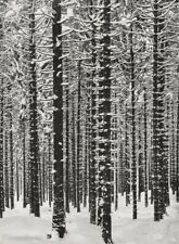 1928 Albert Renger-Patzsch Winter Forest Snow Trees Landscape Vintage Photo Art