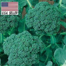 500 Seeds De Cicco Broccoli Italian Broccoli Seeds Heirloom Non-Gmo Usa-Seller !