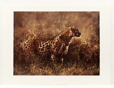 Signed Nancy Glazier Leopard in the Grass Wildlife Lithograph Retails $450 #118T