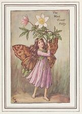 CICELY MARY BARKER c1930 THE WIND-FLOWER FAIRY Painting Vintage Art Book Print