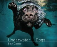 Underwater Dogs by Seth Casteel Book The Cheap Fast Free Post