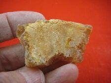 (k-3523) 15 g Rare Kauri tree Gum copal young Amber New Zealand Tane Mahuta