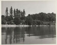 Vintage 1950s Lake Erie Shoreline Pine Trees Cabins Beach 8x10 BW Photo