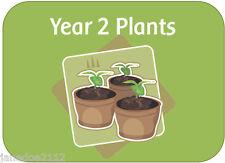 KS1 Y2 Science topic PLANTS teaching resources display powerpoints worksheets CD