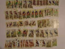 Zambia Birds many values collection  3