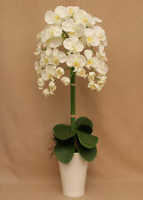 ARTIFICIAL SILK IVORY ORCHID 3 STEMS 80C WITH LEAVES IN WHITE CERAMIC PLANT POT