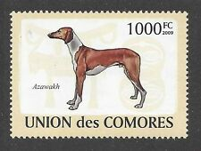 Art Body Study Postage Stamp AZAWAKH DOG Comores Africa 2009 MNH