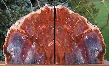 SiS: GORGEOUS NATURAL ART 20+ lb. ARIZONA RAINBOW Petrified Wood Bookend Set!!