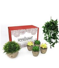 Evelyne 5 Pc Artificial Plants Indoors in Pots Gift Set & Hanging Plant