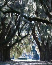 8x10 Fine Art Print Digital Photography Nature Cathedral Ford Plantation