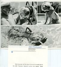 BENJI THE DOG BENJI TAKES A DIVE AT AT MARINELAND ORIGINAL 1981 ABC TV PHOTO