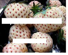 100x Weiße Erdbeeren Ananas geschmack Samen Saatgut Pflanze Obst essbar Neu #121