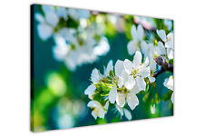WHITE BLOSSOM SPRING FLOWERS FRAMED CANVAS WALL ART PICTURES HOME KITCHEN PRINTS