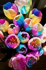 5Pcs Rare Rainbow Tulip Bulbs Seeds The Most Beautiful Flower Seeds Decor AZ032