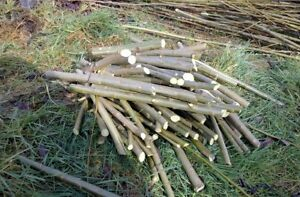 50+ Salix viminali cuttings, hedge,dome,tree,logs,biomass