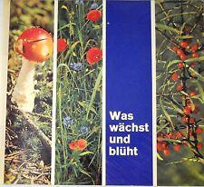 Sammelbild Album -  Was wächst und blüht - Serienbilder Birkel Nudel Werke