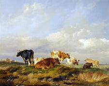 Cooper Sidney Thomas Cows In Kent Meadow Print 11 x 14  #5205