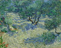 Vincent Van Gogh Olive Orchard Giclee Canvas Print Paintings Poster LARGE SIZE