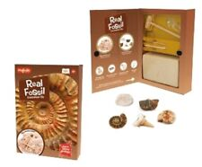 REAL FOSSIL EXCAVATION KIT - SC250 DIGGING PALEONTOLOGY ARCHAEOLOGY  SCIENCE TOY
