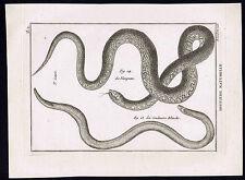 Snakes-Vampum, Couleuvre, Grass or Ringed Snake- 1789 Bonnaterre Engraving