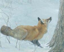 Robert Bateman Art Print Sharp Shinned Hawk Varied Thrush Grey Fox on Cliff Gray