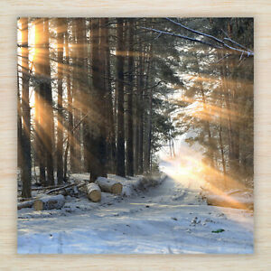 Christmas Cards & Packs - Woodland Walk Forest Winter Snow landscapes -Freepost