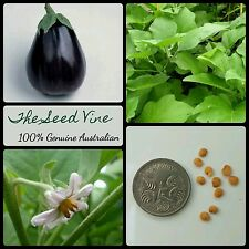 50+ ORGANIC BLACK BEAUTY EGGPLANT SEEDS (Solanum melongena) Edible Vegetable