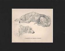 Vintage Scottish Deerhound Dog Large Print 1938 by K.F. Barker Matted 10 x 13