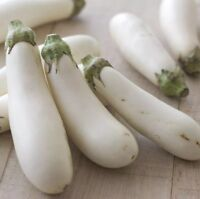 White Long Eggplant Seed 15 Seeds Solsnum Melongena Vegetable Seeds C145