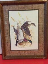 Vintage Charles E Murphy Mallard Duck Print Original Frame Rustic Decor Gift