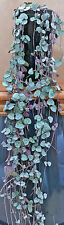 CEROPEGIA WOODII String of Hearts. SEEDS buy 5, 10, 15, 20, 30, 40 or 50