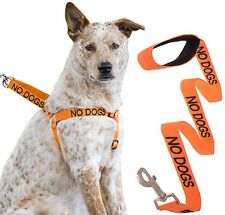 NO DOGS Color Coded Orange Warning Strap Harness Leash Not Good With Other Dogs