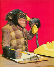 1959 MONKEY HUMOR Chimpanzee Boss BUSINESS Telephone Communication Animal Photo