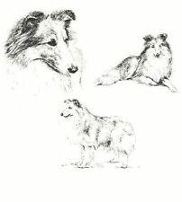 Shetland Sheepdog / Sheltie - 1963 Vintage Dog Print - Matted