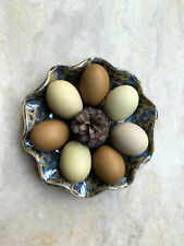 12+ Oliver Egger (F1-F6) Hatching Eggs