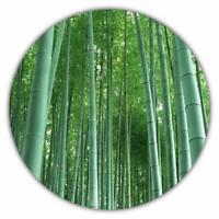 Riesenbambus - Bambus - 50 Samen - schnelles Wachstum - winterhart