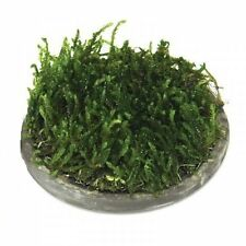 Aquatic Moss Cultivation Ceramic Mesh Kit, Small Circle
