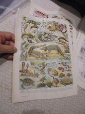 Ancienne Gravure Pédagogique d'Encyclopédie Les Reptiles , Amphibiens